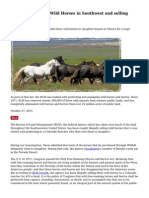 BLM Rounding up Wild Horses in Southwest and selling them for Slaughter