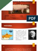 I.A. porcinos.pptx