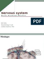 BIO 542 Lab PPT 01 - Neuroanatomy Review (Website) (1).ppt