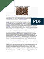 Desarrollo y Reproducción de La Hormiga