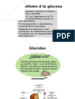 Glucosa UTPL Copy