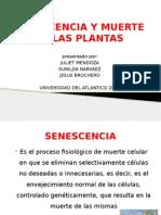 exposicion senescencia.pptx