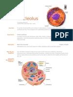 Nucleolus Resume