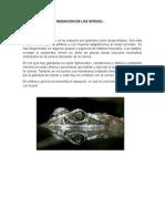 Monografia de Anaotomia Comparada
