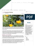 Companion Planting – Sustainable Gardening Australia • SGA _ Sustainable Gardening Australia.pdf