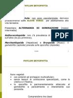 Briofite