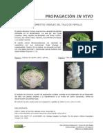 49_Propagacion_repollo.pdf