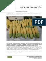 107_Micropropagacion_embriones_maiz.pdf