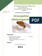 Drosophila Monografía