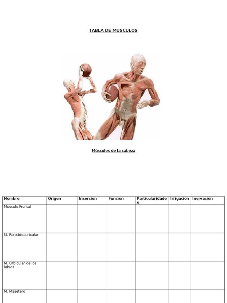 Tabla de Musculos Para Completar