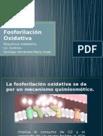 Presentación-Fosforilación-oxidativa