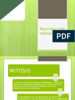 Reproducción Celular sexual