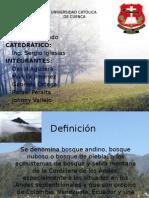 Geomorfología-(bosque andino)