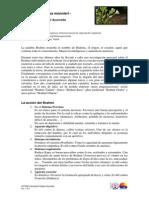 Brahmi_Planta_legendaria_Ayurveda.pdf