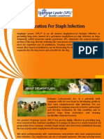 Medication for Staph Infection