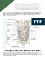Resumo Moore - Anatomia de Abdome