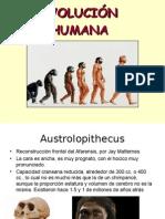 evolucion humano 8vo