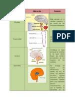 Tarea 2 - Estructura Anatómica