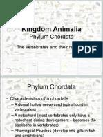 kingdom animalia phylum chordata-2