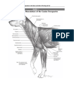 Anatomia de Piermattei