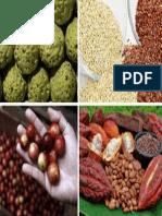 Agro Export_1