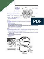 4. SISTEMA ENDOCRINO II.docx