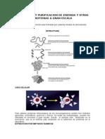 Purificacion de Proteinas