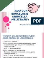 El cerdo como modelo de experimentación para la Brucelosis