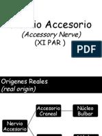 nervio accesorio 015