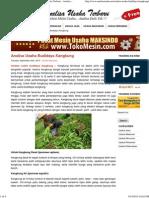 Analisa Usaha Budidaya Kangkung - Analisa Usaha Terbaru - Analisa Usaha Terbaru