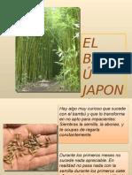 El Bambu Japones-33685