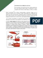 Taller Productos  Carnicos. 2015-02.docx