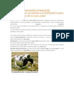 Capítulo4sindorm Vaca Caida