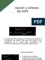 Transcripcion, Traduccion Del ADN