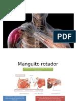 Tendinitis Del Maguito Rotador