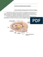 102656744-Guia-de-Biologia-3º-Medio-Sistema-Nervioso-Central (1).doc