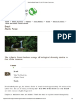 About the Atlantic Forest in Brazil _ the Nature Conservancy