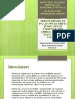 Proiect Forestier