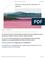 Por Qué Tiene Tantas Flores El Desierto de Atacama