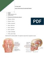 Cara Penamaan Otot OKF