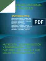 SEMINARIO.. grupo 2.pptx