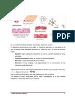 2 Tejido Epitelial_conjuntivo.pdf