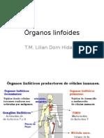 Órganos linfoides