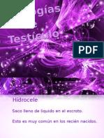 patologia de testiculo