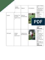 Farmacobotanica Practica 8