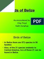 New Birds of Belize 05