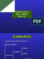 Morfología-del-frutal.ppt