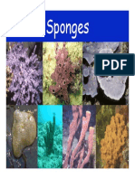 Sponges Eng 01
