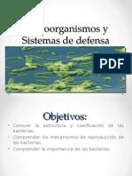 Bacterias y Virus Cuarto (1)