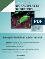 Hibridizare Acizi Nucleici